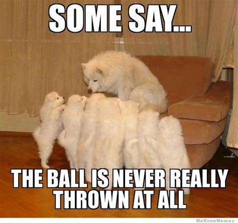 Ball Memes - happy christmas from the small dog sue vincent s daily echo