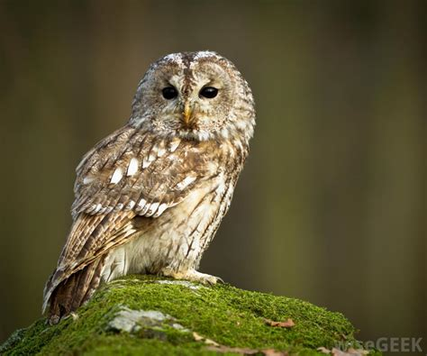 what is an owl pellet with pictures