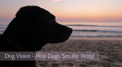 how dogs see vision how dogs see the world