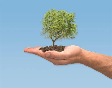 tree to plant consejos para plantar un 225 rbol ideas para jardines y