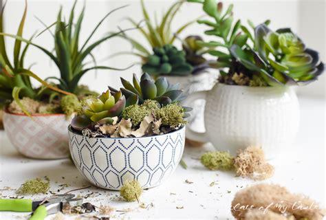 succulent planters diy succulent planters