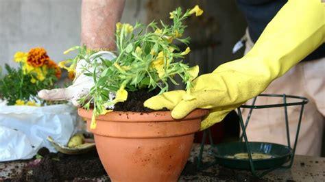 Pflanzen Auf Dem Balkon 3761 by Blument 246 Pfe Arten Nutzen Vor Und Nachteile Und