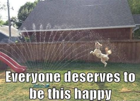 Dog Sprinkler Meme - happy dog quotes quotesgram