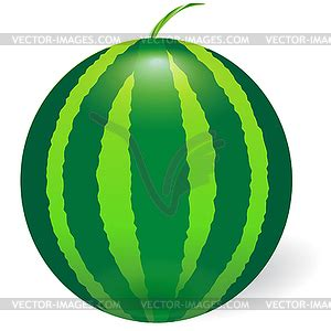 Semangka Vektor watermelon vector image