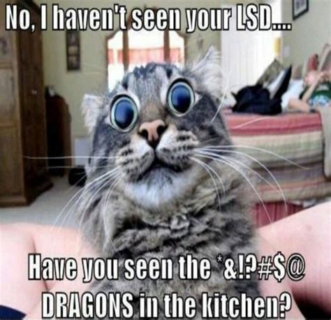 New Funny Memes 2016 - funny cat memes 40 hilarious pictures page 2