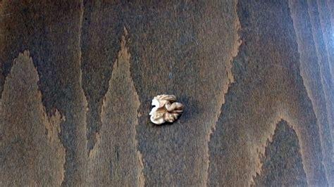 kratzer im laminat entfernen kratzer im laminat mit einer walnuss entfernen frag mutti