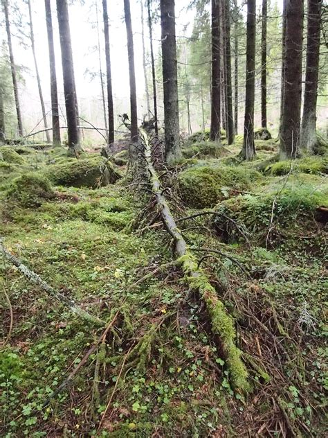 if a tree falls in the forest on the border between the deaf and hearing worlds books if a tree falls in a forest