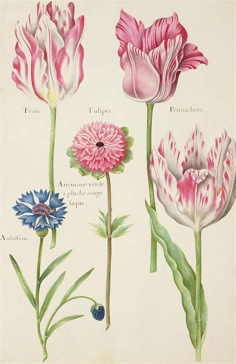 libro the art of botanical 821 best libros de vegetabilibus растения medieval manuscripts botanical images on