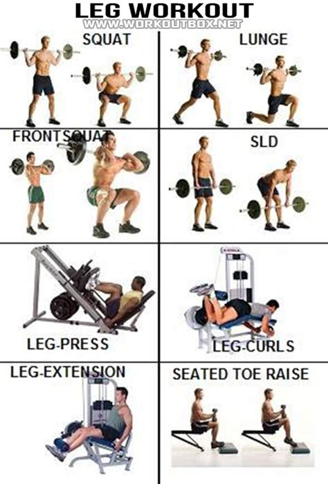 leg workout healthy fitness exercises calves legs