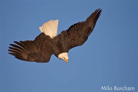 Senar Orca Eagle 50 M milo burcham photography the best of 2012