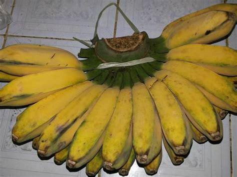 Satu Sisir Pisang Kepok resep pisang goreng pisang goreng kerikil keju