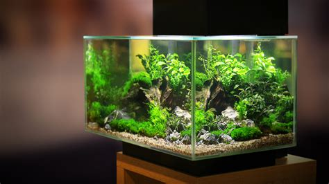 planted tanks require