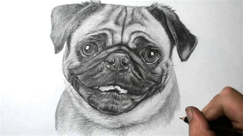 simple pug drawing realistic pug drawing easy drawing a pug puppy realistic amazing