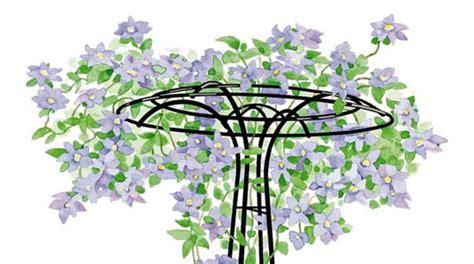 Trellis Arch Top How To Grow Clematis Gardener S Supply