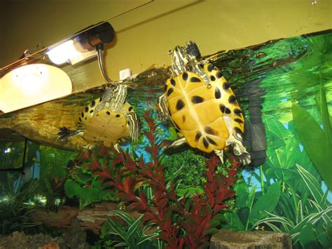 lade per tartarughe d acqua acquaterrario tartarughe acqua foto petpassion