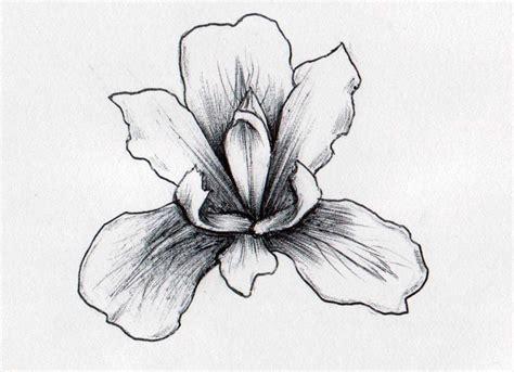 iris flowers drawings flowers tree of life v98nwmjg0n art pinterest drawing flowers