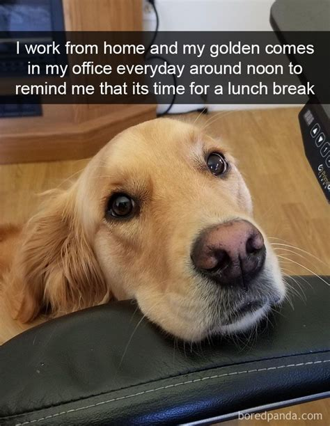 work  home   golden    office everyday