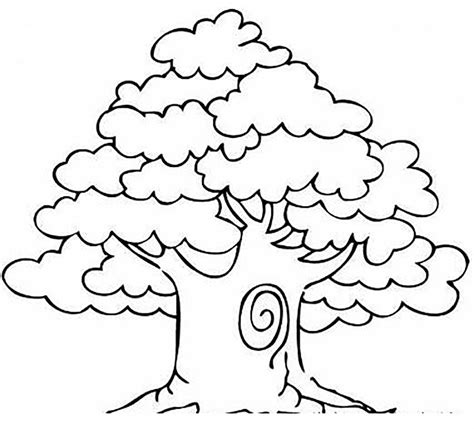 mango tree trees coloring pages pinterest kids net