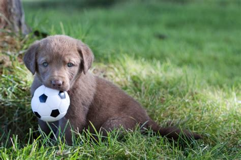 maryland puppies the 50 cutest baby animals of america state by state huffpost
