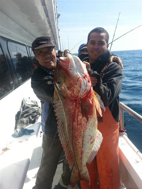 captain lou fishing boat freeport 40 best images about capt lou fishing trips on pinterest