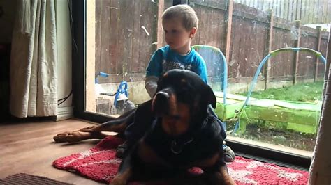 rottweilers and children rottweiler the best for