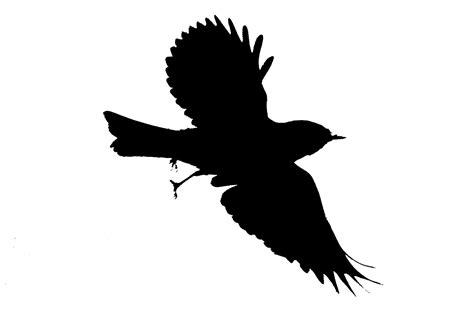 Flying Blackbird Outline by Flying Bird Silhouette Clipart Best