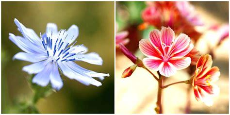 gambar bunga cantik harian nusantara