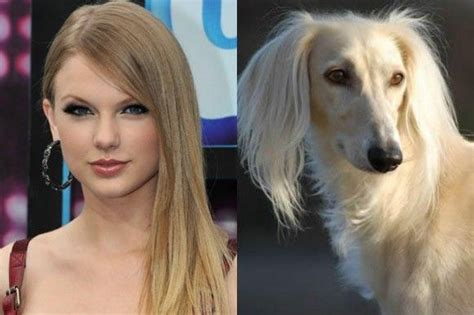 dogs that look like puppies as adults and the dogs they look like dogs dogs animals are