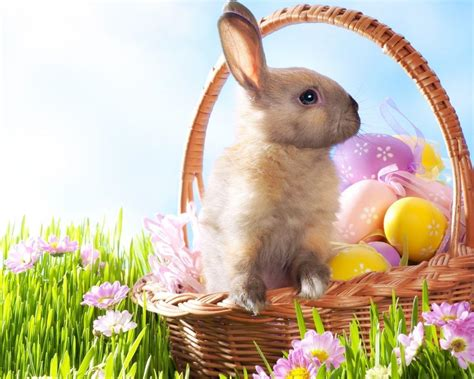 free wallpaper easter bunny easter bunny wallpapers free wallpaper cave