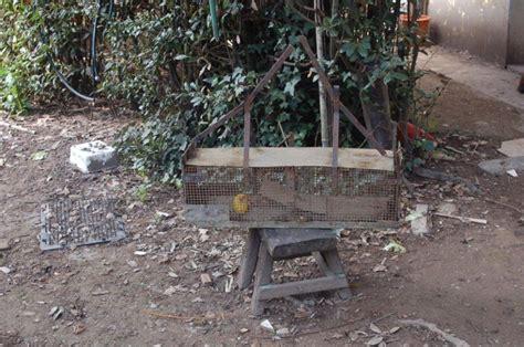 gabbia trappola per uccelli trappole esche e gabbie denunciati bracconieri 1 di 6