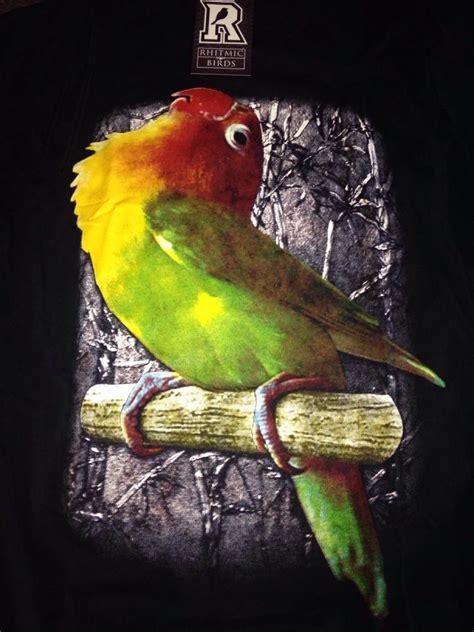 Jual Burung Lovebird gambar burung bird termahal gambar v