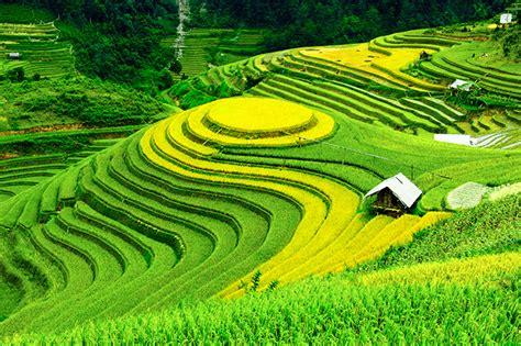 bukan  kebun teh berikut   perkebunan terindah