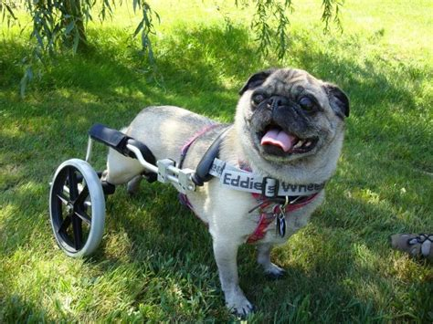how to make a wheelchair how to make a wheelchair a complete guide to a useful diy project