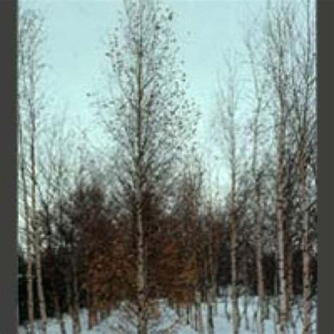fargo winter garden birch dakota fargo friends school plant sale