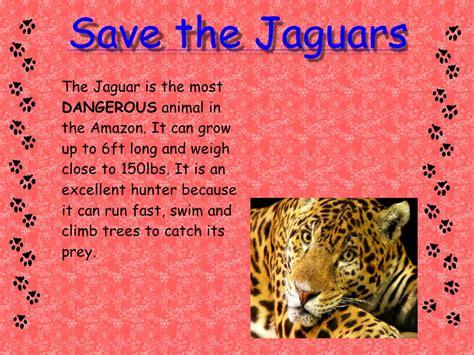 rainforest jaguar facts rainforest facts images