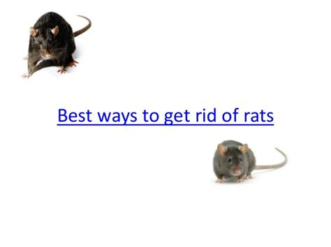 best ways to get rid of rats