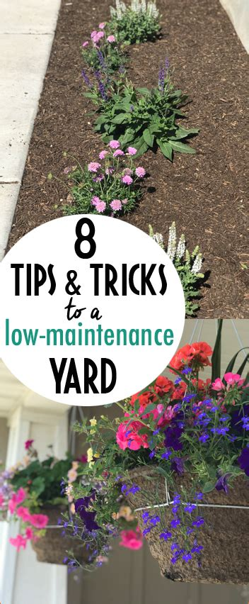for a low maintenance yet tips to keeping a low maintenance yet beautiful yard