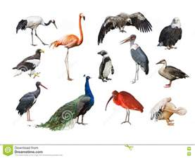 Essay On Different Types Of Birds In by A Collage Of Birds From Different Continents Stock Photo Image 72598540