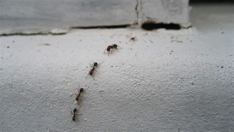 termites vs ants how to really tell the two insects apart
