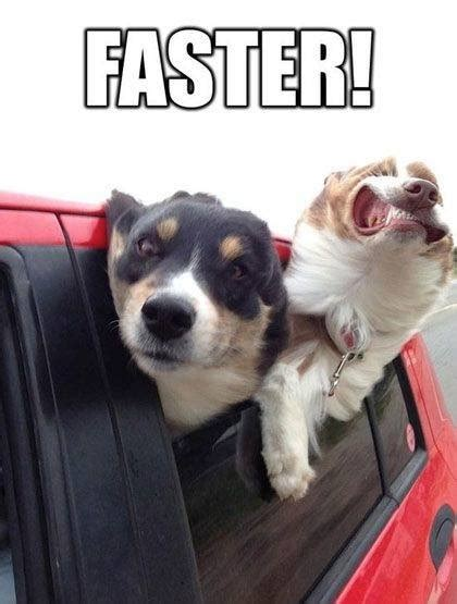 Silly Dog Meme - funny dog meme faster funny dirty adult jokes memes