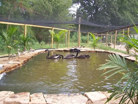 17 best ideas about duck pond on duck coop
