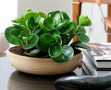 interior plants for houses best 25 house plants ideas on pinterest plants indoor indoor green indoor plants