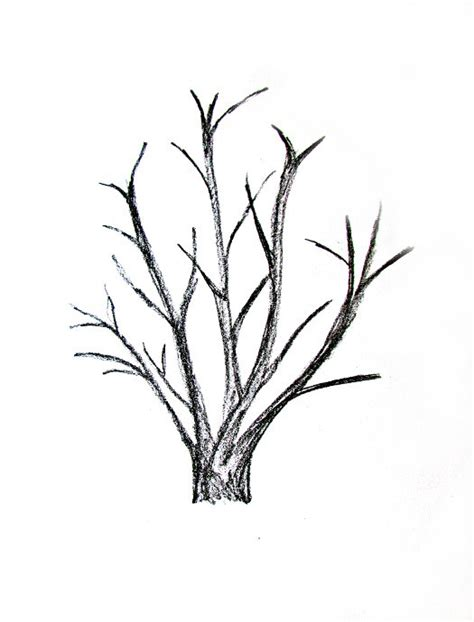 sketch a tree how to draw a tree