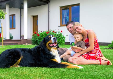 in house dog trainer the advantages of in home dog training suburban k9