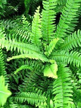 Plante D Appartement D Origine Tropicale by Mamaya Et Moi Avons Un 187 La Foug 232 Re De Boston