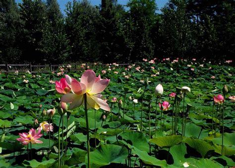 fiori mese di luglio fiori mese di luglio fabulous loversu mix organic