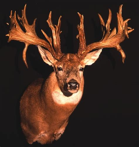 Records In Ohio Ohio Record Bucks Now In Searchable Database