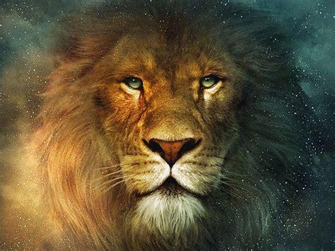 imagenes de leones gratis im 225 genes hd de leones fondos de escritorio gratis