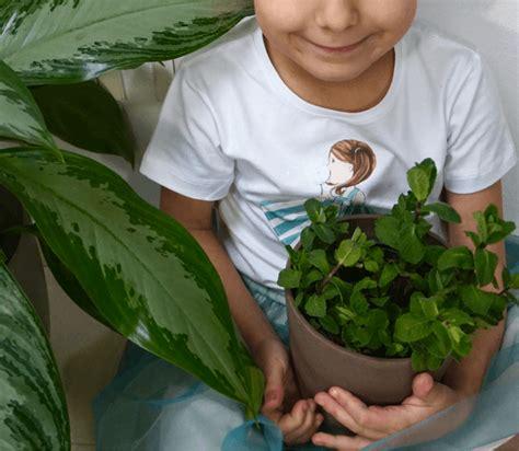 orto in casa orto in casa e tre ricette per i bambini da fare con le