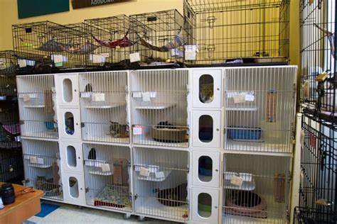 petco adoption city critters seeking temporary cat shelter town